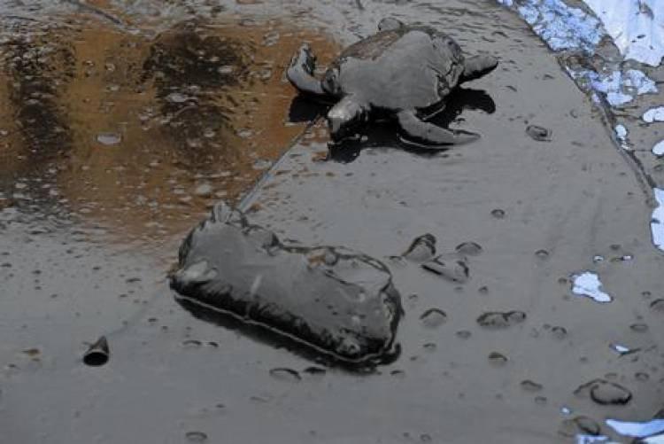 BRASIL: 2500 KILÓMETROS DE PLAYAS EN RIESGO POR DERRAME DE PETRÓLEO